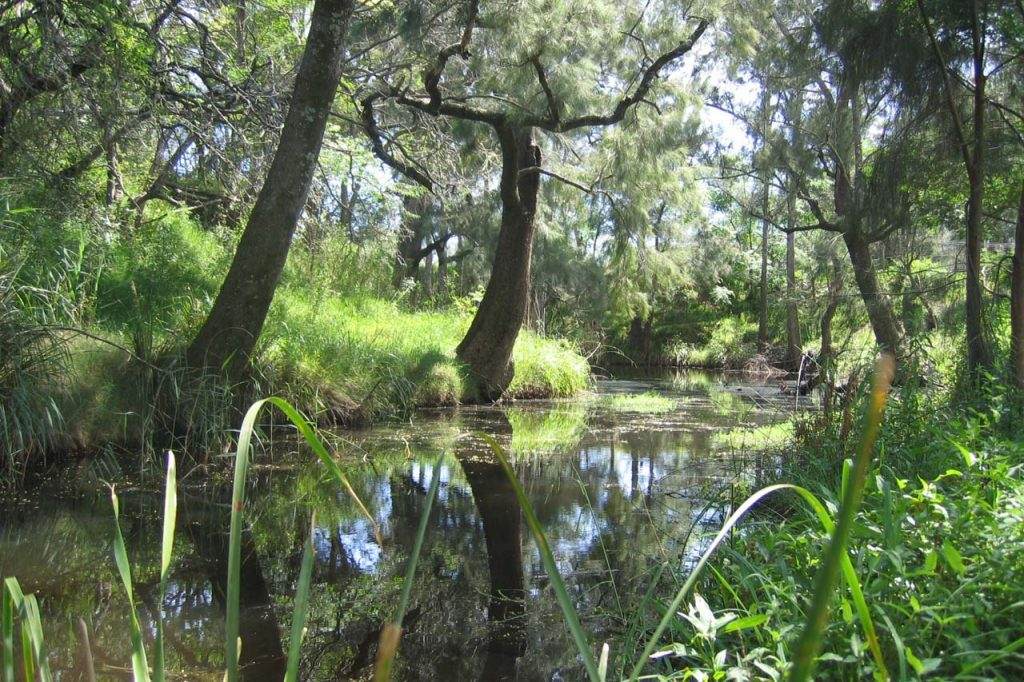 Newly discovered platypus population in Western Sydney to benefit from Landcare led Bushfire $55k recovery grant.